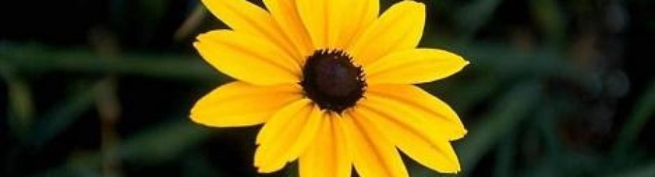 cropped-bunga-kuning.jpg