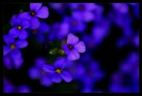 luv lavenders