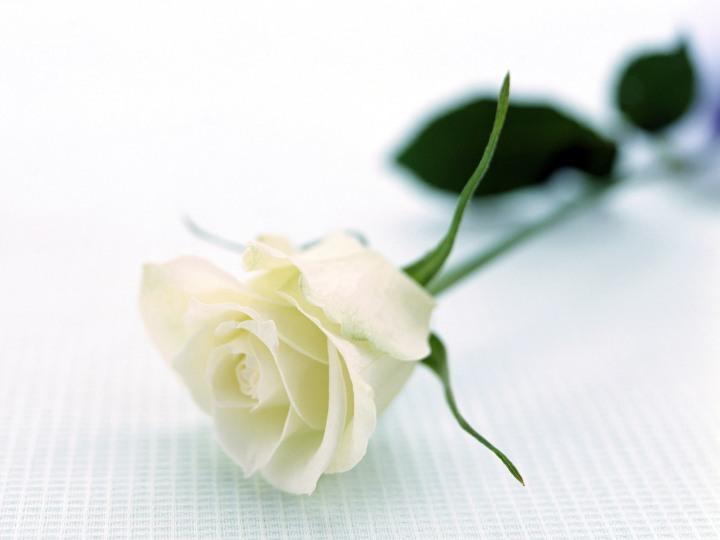 bunga-cun1.jpg